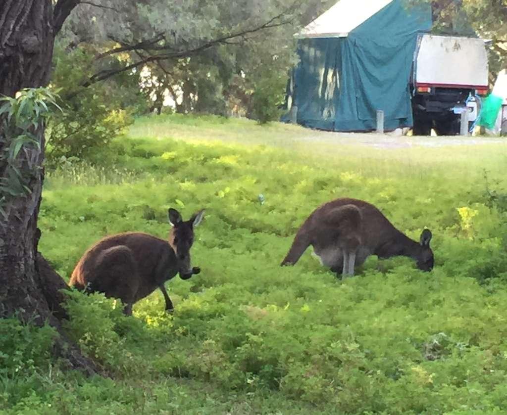20151015_kangaroo