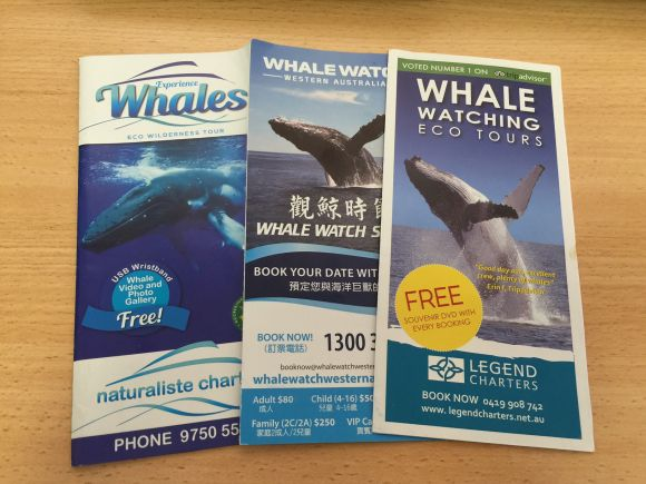 20151023_whale_watching_brochure